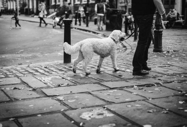 clem-onojeghuo-154010_dogs_walking
