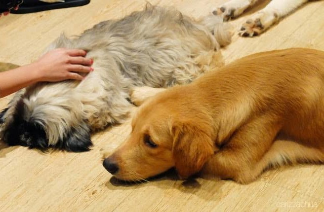 Here Are 6 Reminders to Not Stress Out Pets In an Animal Café
