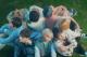 preen stray kids virtual hangouts globe